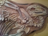 Dinosaure Tenontosaure 1- jurassique USA