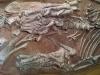Dinosaure Tenontosaure 5 - jurassique USA