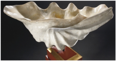 Valve Tridacna gigas fossile -15000ans -Timor