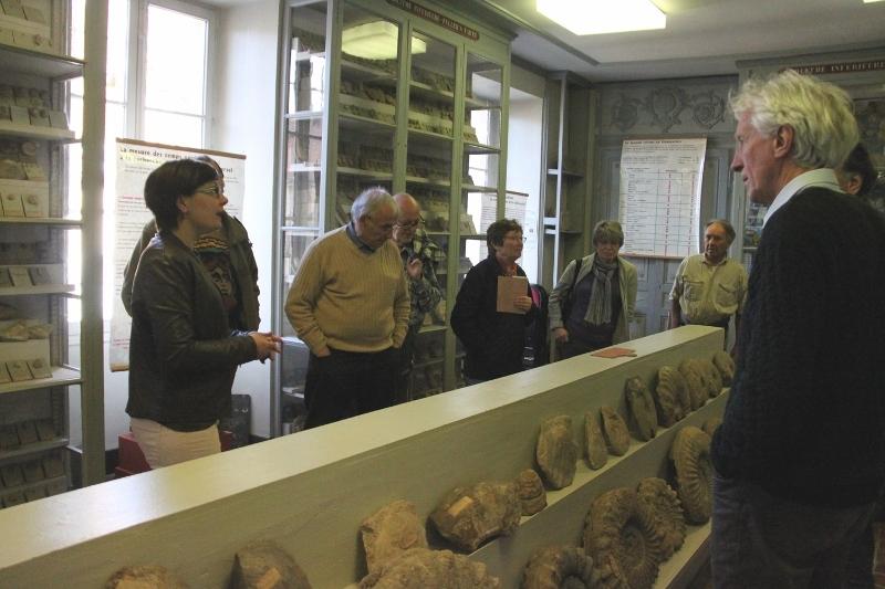 Dans la galerie de Paléontonlogie