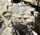 Spongiaire ramifié ou concrétions calcaires?