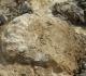 Aperçu sur des ...bouts d'ammonites