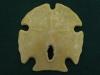 Encope grandis - Floride - Pleistocène