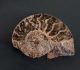 Ammonite sciée et polie - Aveyron