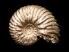 05-Ammonite (prov. Aveyron). Collection Michel Nguyen. Photo François H. Nicoly