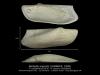 BI110-40 Barbatia angusta