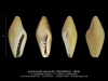 GA208-02 Volvarinella dissimilis