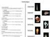 Classification des Gastéropodes