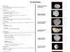Classification des Pélécypodes