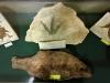 Empreinte de dinosaure. Moulages poissons réalisés à l'atelier