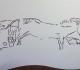 Gravure figurant humains, ours, cheval, bison et poisson - Grotte de la Vache Ariège - Magdalénien - expo temporaire l'ours dans l'art préhistorique