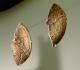 Contours découpés figurant 2 ours- Grotte d'Isturitz PA - Magdalénien - expo temporaire l'ours dans l'art préhistorique