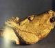 Tête de cheval hennissant - Grotte du Mas d'Azil - Magdalénien - Photo MAN la collection Piette